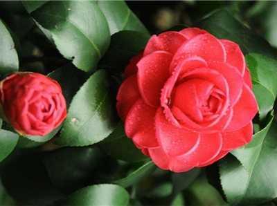 冬天有什么花开 八种冬季花开不断的花卉