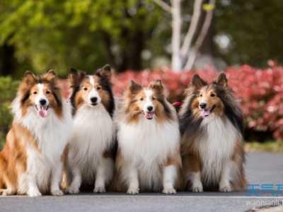 梦见狗 女人梦到狗是什么意思