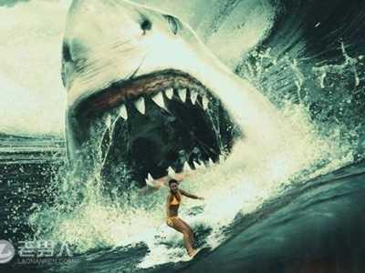 海洋最大的动物是什么 海洋动物十大霸主排名